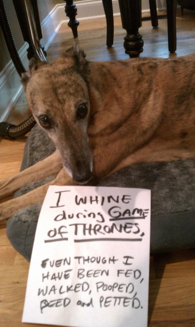 13-Dog-Shaming