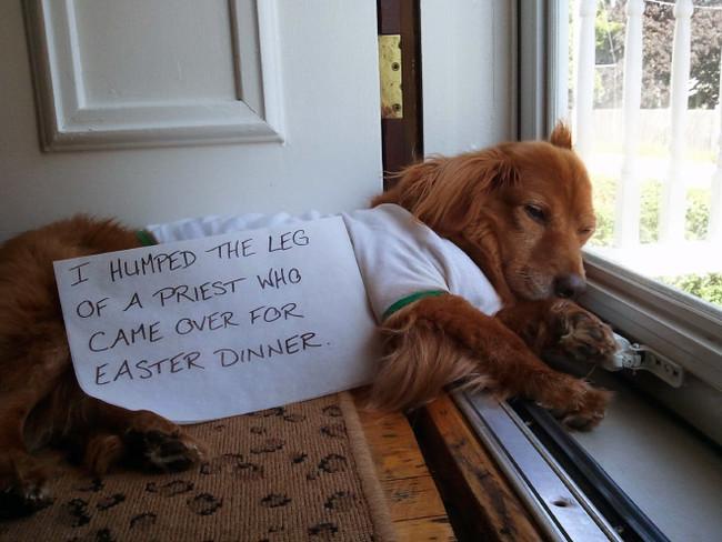 14-Dog-Shaming