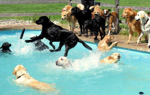 15-Dogs-Who-Have-Really-Enjoyed-Summer