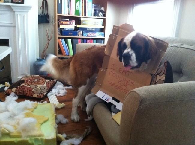 16-Dog-Shaming