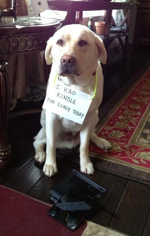 17-Dog-Shaming