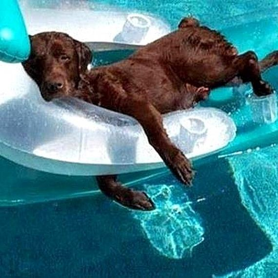 17-Dogs-Who-Have-Really-Enjoyed-Summer