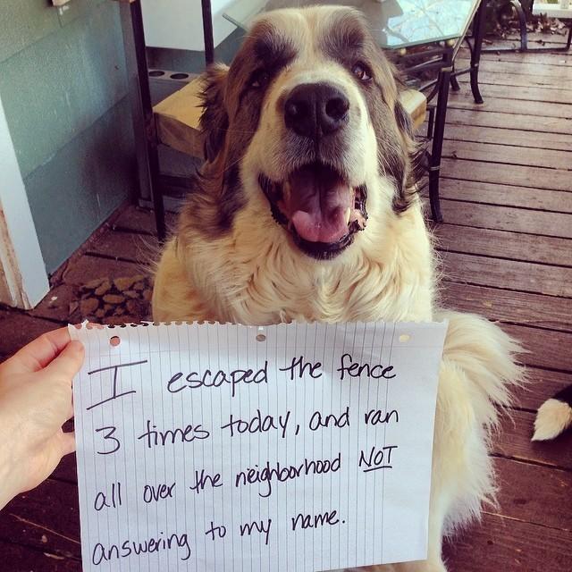 18-Dog-Shaming