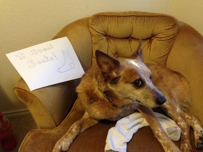 19-Dog-Shaming