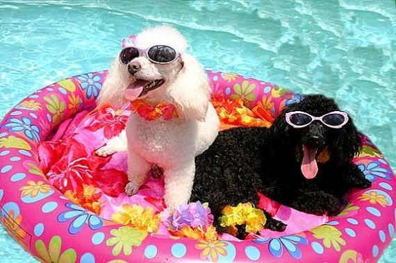 19-Dogs-Who-Have-Really-Enjoyed-Summer