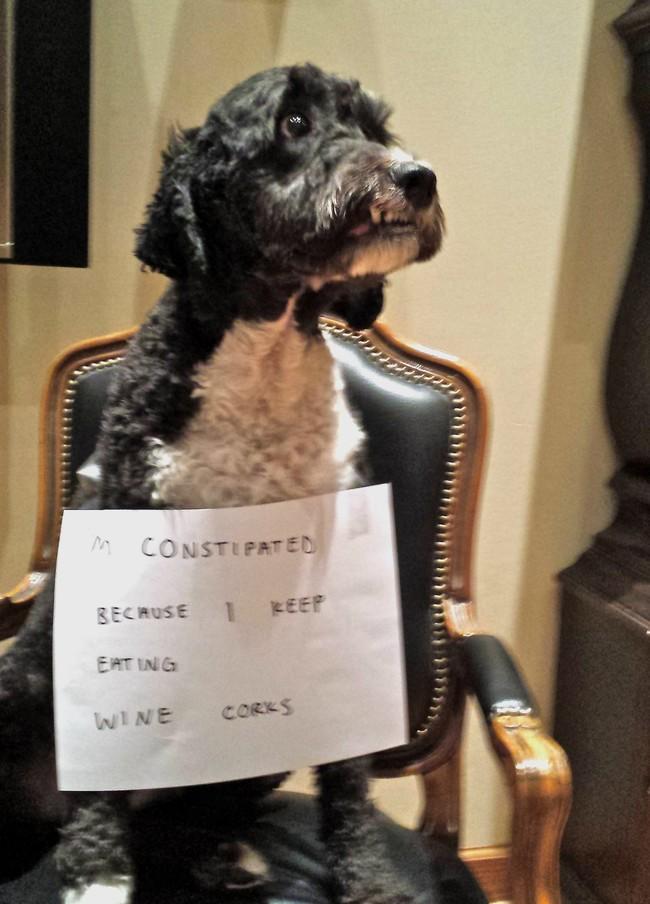 20-Dog-Shaming