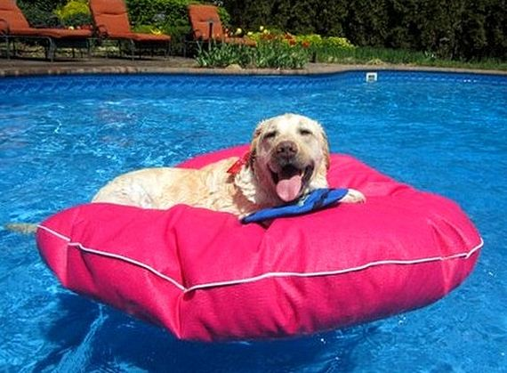 20-Dogs-Who-Have-Really-Enjoyed-Summer