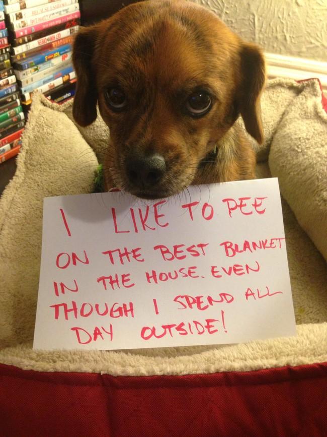 21-Dog-Shaming