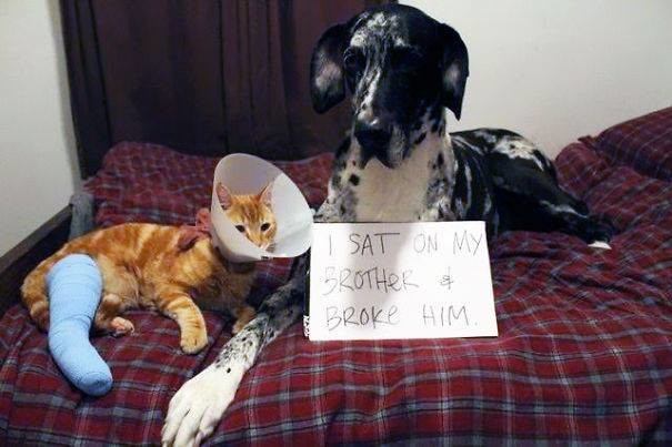 24-Dog-Shaming