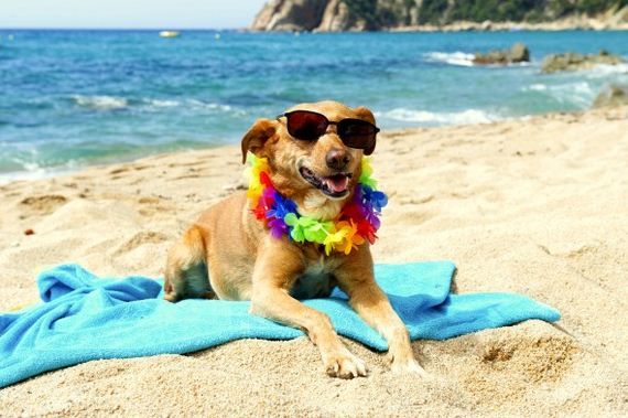 24-Dogs-Who-Have-Really-Enjoyed-Summer
