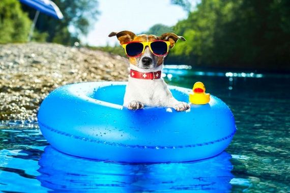 27-Dogs-Who-Have-Really-Enjoyed-Summer