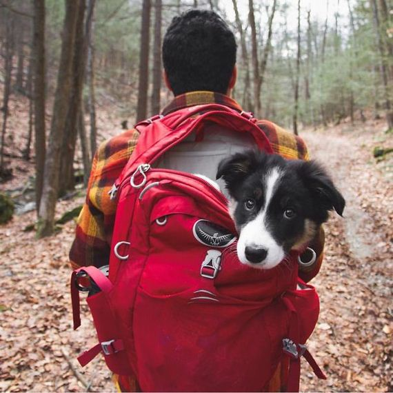 Camping With Dogs Is An Inspirational Instagram Account