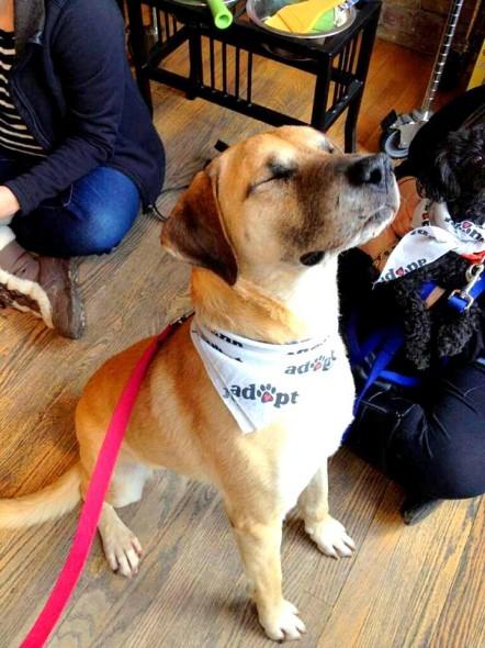 Gunshot-Dog-is-Adopted2