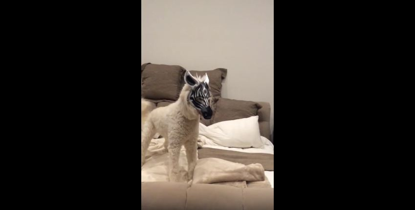 Dog in a Mask Freaks out Orange Cat