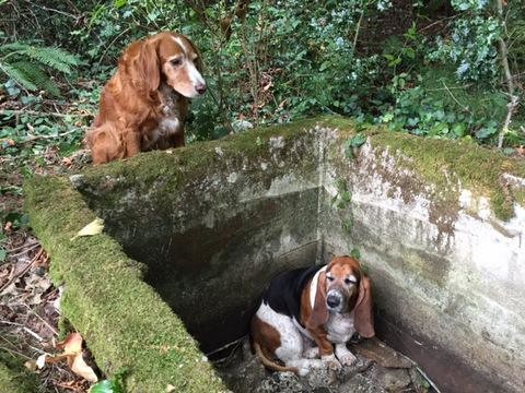 A Dog Kept Watch Over Her Best Friend For Days…The Photos Will Break Your Heart