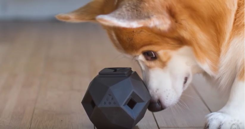 Dog Owners Create Impressive Puzzle Toy To Help Stimulate Our Dogs's Minds