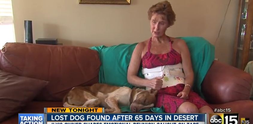 After A Horrible Car Wreck, This Young Dog Disappears In The Desert. 65 Days Later…A Miracle