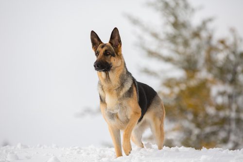 From The Vet: What You Can Do Now To Make Winter Easier For Your Pup