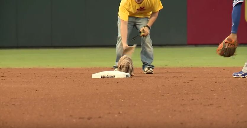 "Dog Breaks Free At Ball Park And Ends Up Being The ""Wiener"" Of The Night!"