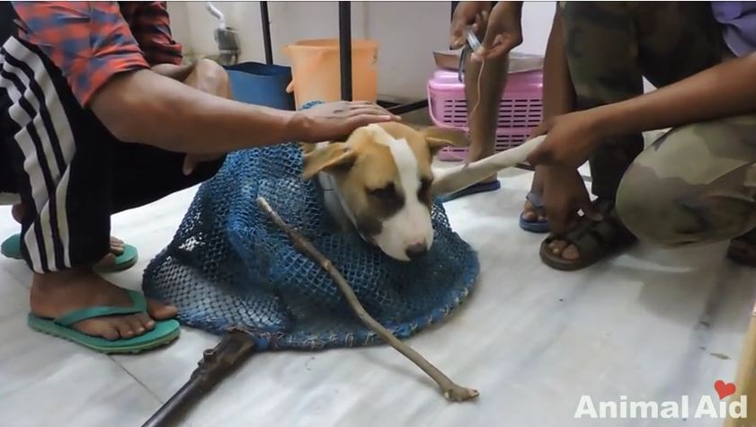 "Rescuers Save Dog With Wire ""Collar"" Around Neck"
