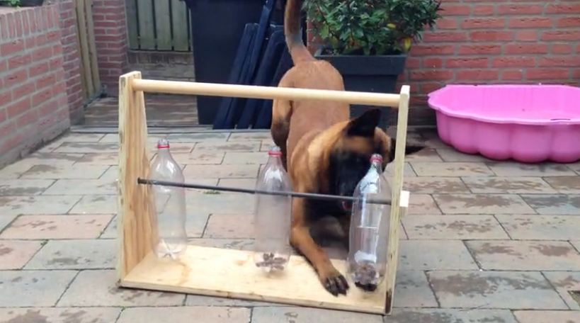 Clever dog figures out bottle game for treats