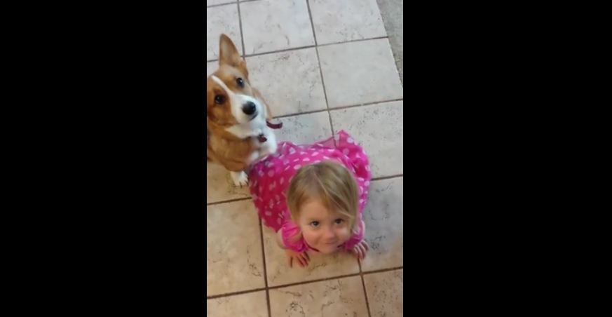 Toddler imitates dog for treats