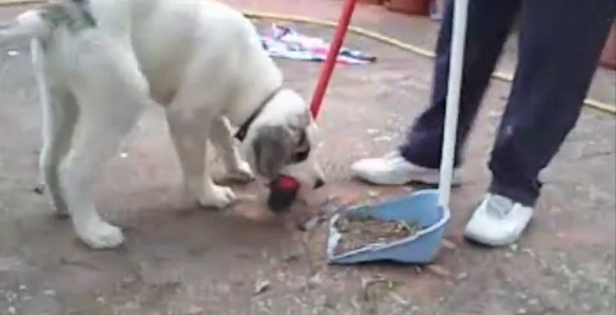 This Silly Puppy Has The Strangest Plaything Ever, But It's Really Adorable
