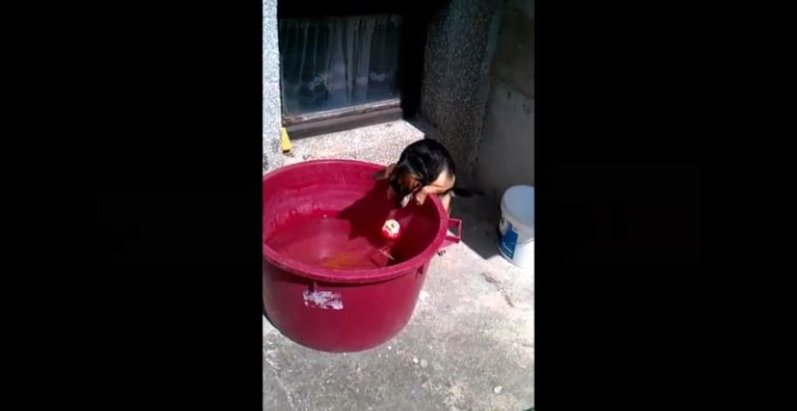 Ball in water proves challenging for determined dog