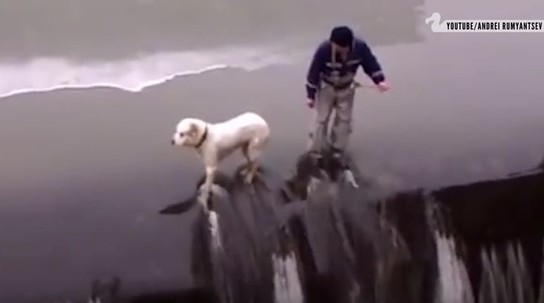 Video Showcases Humans Rescuing Dogs Because… They Would Do The Same For Us