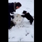 Dog helps her owner build a snowman