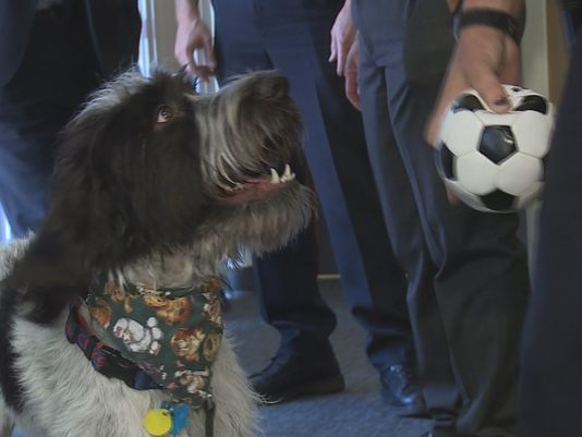 Boise Police Department Makes Rescue Dog new Mascot