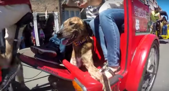 Students Make Tribute Video to a Very Special Dog