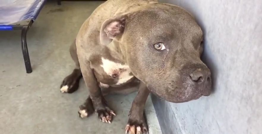 This Dog Was Shown Love For The First Time — What Happened Will Melt Your Heart