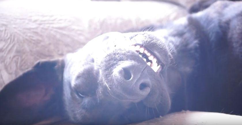 Dog Gets Beauty Rest
