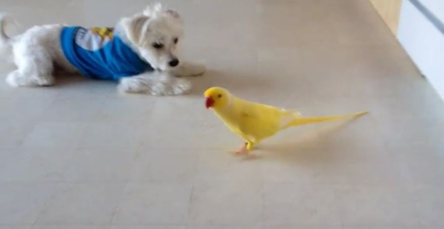 Curious Dog Follows Bird Around Kitchen
