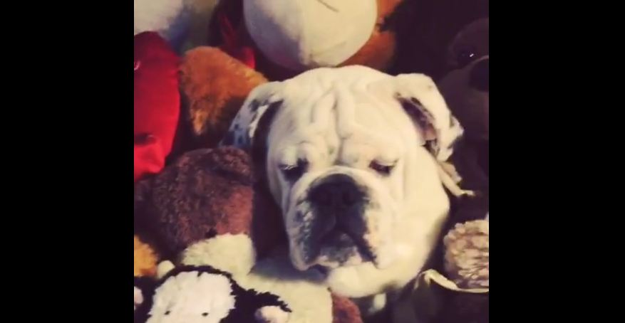 Can You See What's Hiding In This Mountain Of Stuffed Animals? LOL.
