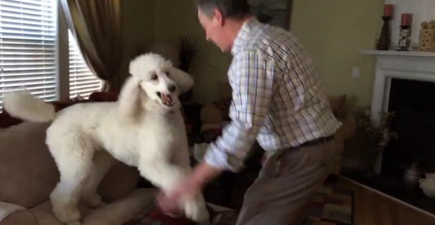 Dog and owner playfully chase each other