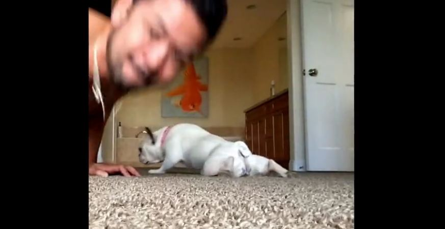 Dog doing push-ups with his owner