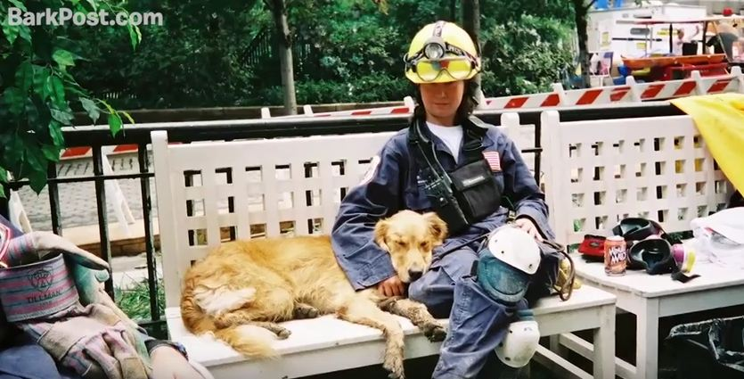 The Last Known Rescue Dog From Ground Zero Gets The Treatment She So Deserves