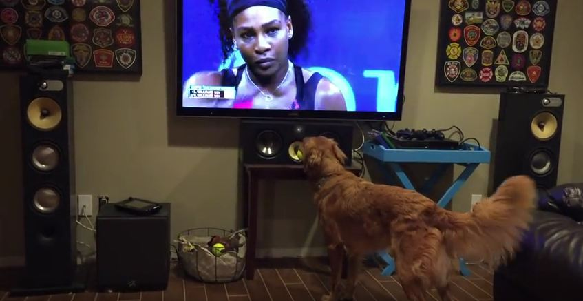 No One Loves Watching The U.S. Open More Than This Dog