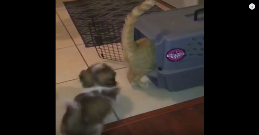 Dog Shows The Cat Who Is Boss