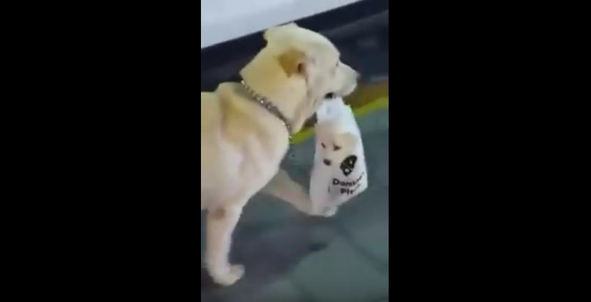 Their Jaw Dropped When They Saw What This Dog Was Carrying In A Bag