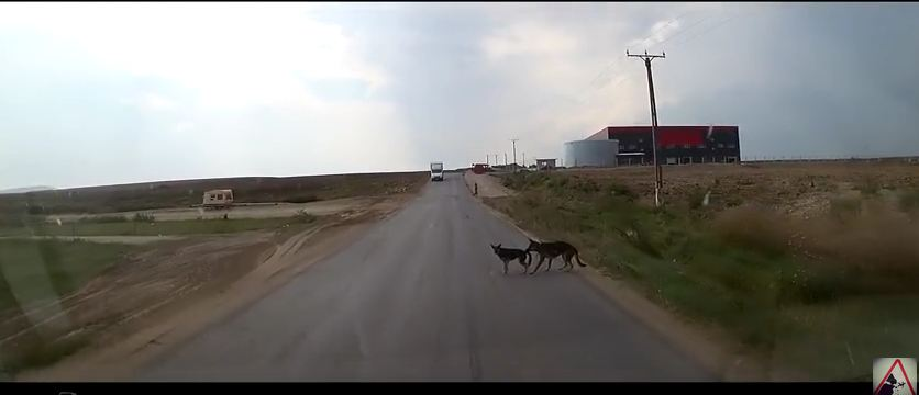 Dog Heroically Saves Friend From Certain Death