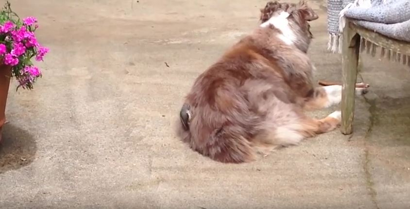 Owner's Catch Creature Moving In Dog's Fur And Are Totally Surprised By What It Is Doing