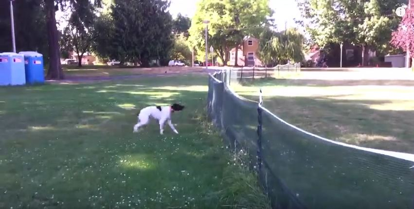 The Frisbee Landed Over The Fence And What This Dog Does Is Downright Amazing.