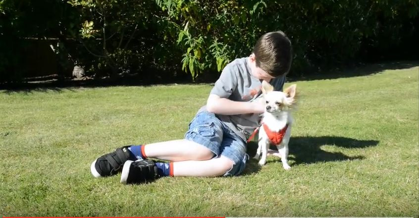 Disabled Boy And Lame Dog Help Each Other Learn To Walk