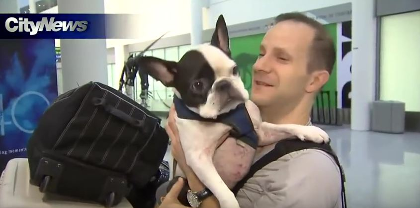 Pilot Turns Around To Save Dog's Life Aboard Air Canada Flight