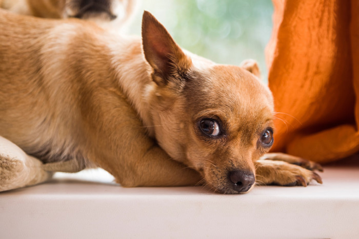 Ask A Vet: Why Does My Dog Pee In Weird Places Around The House?