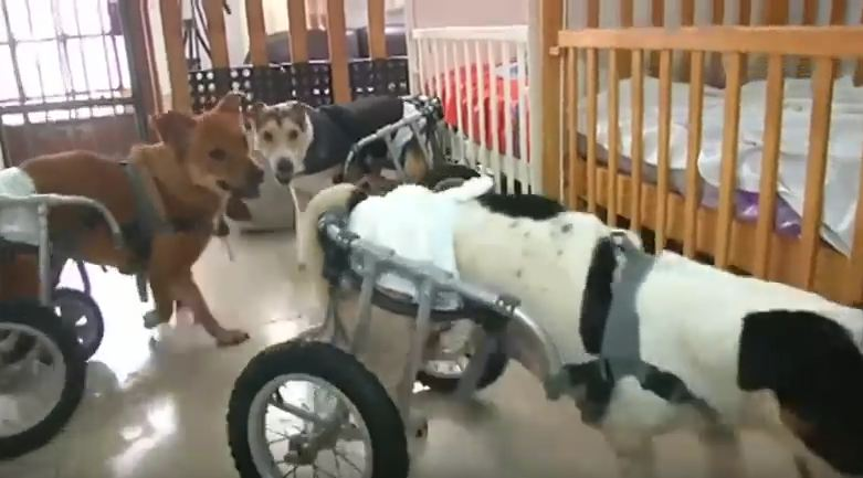 This Woman Runs A Shelter For Dogs With Disabilities In The Most Difficult Place On The Planet