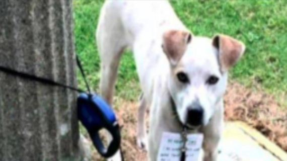 Good Samaritan Walks 3 Miles To Save Dog Tied To Pole And Abandoned With A Note